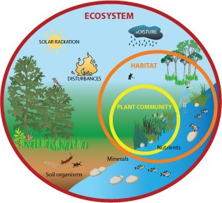 Ecosystem Overview